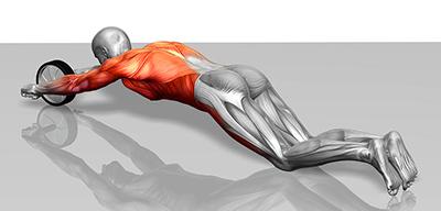 Какие мышцы прорабатывает гимнастическое колесо
