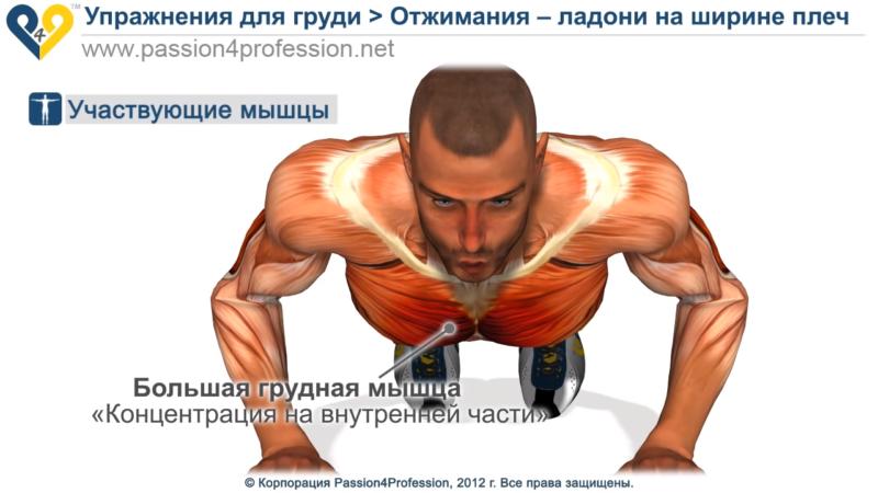 Виды отжимания для развития грудных мышц