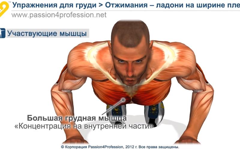 vidy otzhimaniya dlya razvitiya grudnyx myshc